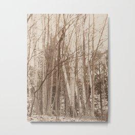 Birch trees Metal Print