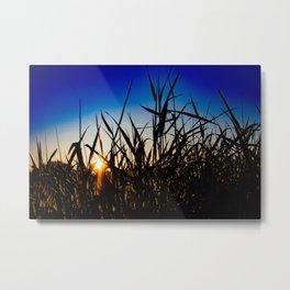 Grassy Field Metal Print
