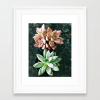 plants Framed Art Prints featuring Plants by Yellow Barn Studio