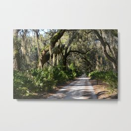 Live Oaks Trail Metal Print