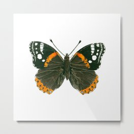 Admiral butterfly ink illustration Metal Print