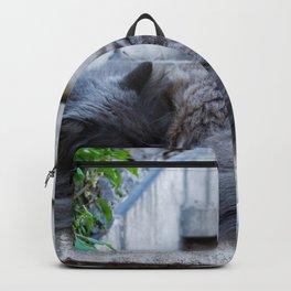 Ash Cat. Backpack