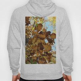 Autumn Brown Hoody