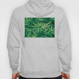 Marijuana Plants  Hoody