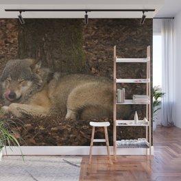 Sleepy Grey Wolf Wall Mural