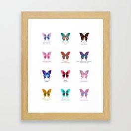 Butterflies 12 Framed Art Print