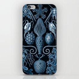 Ernst Haeckel Amphoridea Sea Life iPhone Skin
