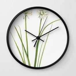Northern Onion (Allium sibiricum) (1920) by Mary Vaux Walcott Wall Clock