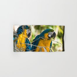 Parrots couple in the tree tops Hand & Bath Towel