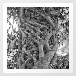 Tangled strangler fig Art Print