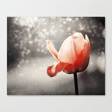 Red Tulip Flower Photography, Coral Tulips Brown Grey Black Nature Photograph Canvas Print