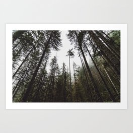 Pacific Northwest Forest Art Print
