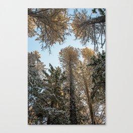 sky trees Canvas Print