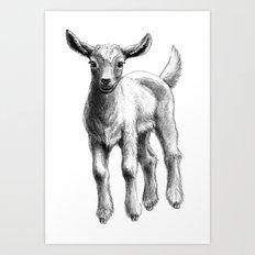 White Goat Baby SK133 Art Print