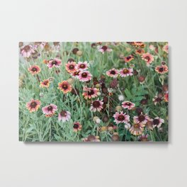 A Bee in the Field of Flowers Metal Print