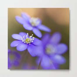 Happy Together Blue Anemones In Forest #decor #Society6 Metal Print
