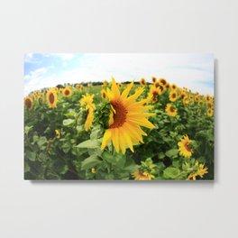 Sunflower 17 Metal Print