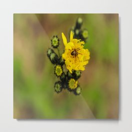 A Spider in a Flower Metal Print