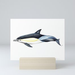 Common dolphin (Delphinus delphis) Mini Art Print