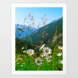 Camomiles in the Alps Art Print