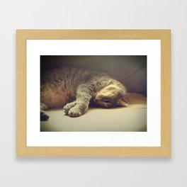 Catnapping Framed Art Print
