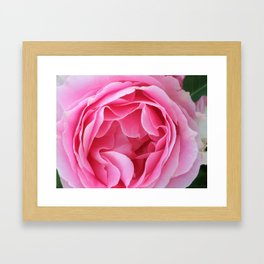 Pink Beauty Framed Art Print