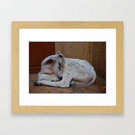 Beautiful calf Framed Art Print