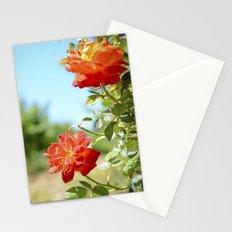 Roses in Santa Ynez California Vineyard Stationery Cards