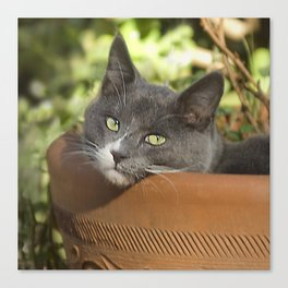 Here's Looking at YOU, Kid! Canvas Print
