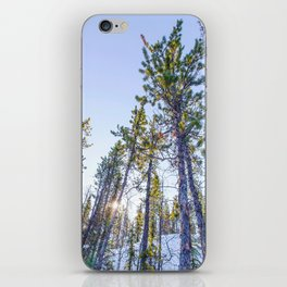 Sunset in the forest iPhone Skin