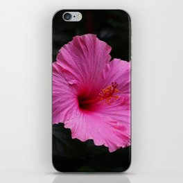 Hibiscus at Eden Project iPhone Skin