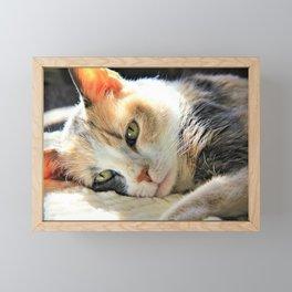 Kitty Light by Reay of Light Framed Mini Art Print