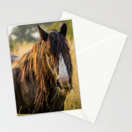 Autumn Horse Stationery Cards