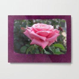 Pink Roses in Anzures 6 Blank P8F0 Metal Print