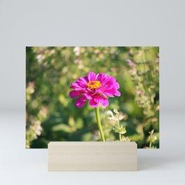 Showy Pink Zinnia Mini Art Print