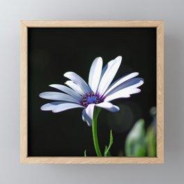 Dancing daisy Framed Mini Art Print