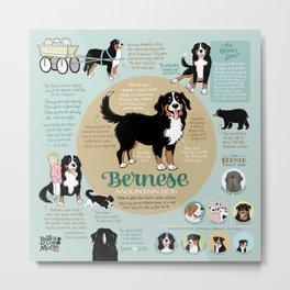 Bernese Mountain Dog Infographic Metal Print