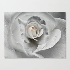 tears in the rosegarden Canvas Print