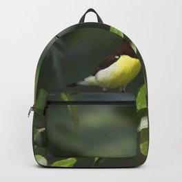 Purple Sunbrid Backpack