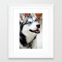 husky Framed Art Prints featuring HUSKY  by Porterhouse LA