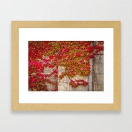 Red Ivy Framed Art Print