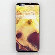 :: MAJA iPhone & iPod Skin