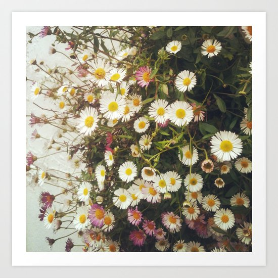 Wall of Daisies by cassiabeck