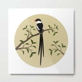 Pin-Tailed Wydah Metal Print