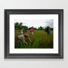 Harvest Framed Art Print