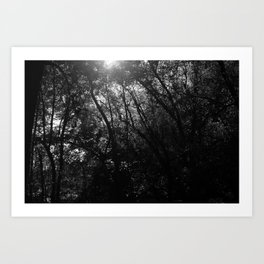 Tangled Up Tree Branches Art Print