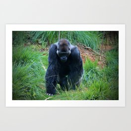 Gorilla On The Prowl Art Print
