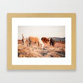 Two Horses Having Dinner Framed Art Print