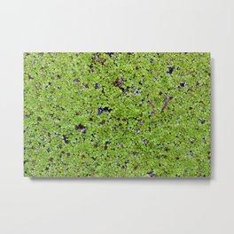 Green Pond Coverage Metal Print