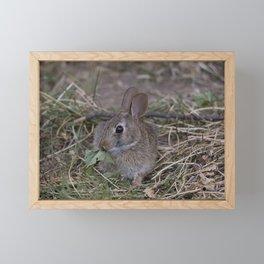 Tiny Garden Bunny Framed Mini Art Print